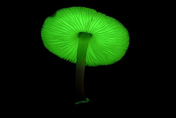 mushroom green glow